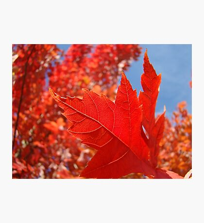 RED Fall Tree LEAVES Art PRINTS Canvas Autumn Photographic Print