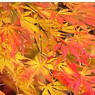 maple leaves by ANNABEL   S. ALENTON