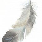 Feather in grey - study by LisaLeQuelenec