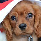 Christmas Puppy by Prettyinpinks
