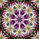 Dahlia Flower Power Abstract by SmilinEyes