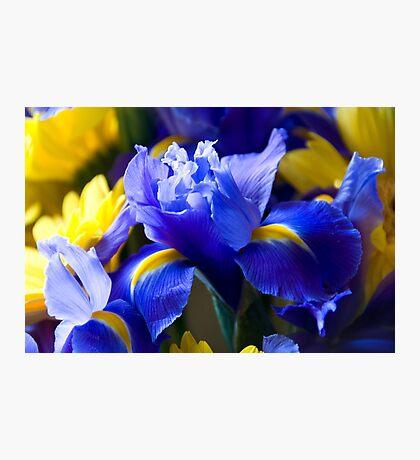 Iris and Gerbera  Photographic Print