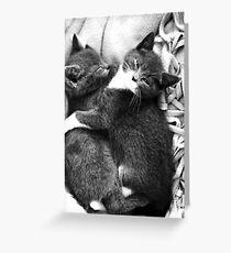 Russian Blue X Kittens Greeting Card