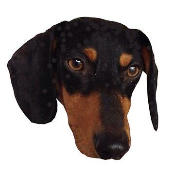 Weiner Dog by smallandup