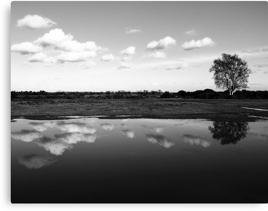 Reflections by Anne Staub