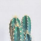 Cactus II by Cassia Beck
