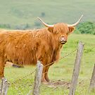 Highland Cow by M S Photography/Art