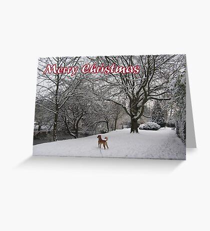 Merry Christmas - dog 01 Greeting Card