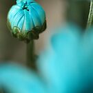 Emerging (Out of the Blue) by AngieBel