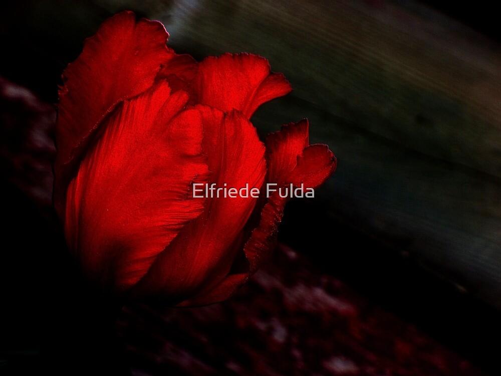 In the Dark ! by Elfriede Fulda