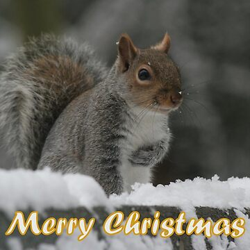 Merry Christmas - Squirrel by hartrockets