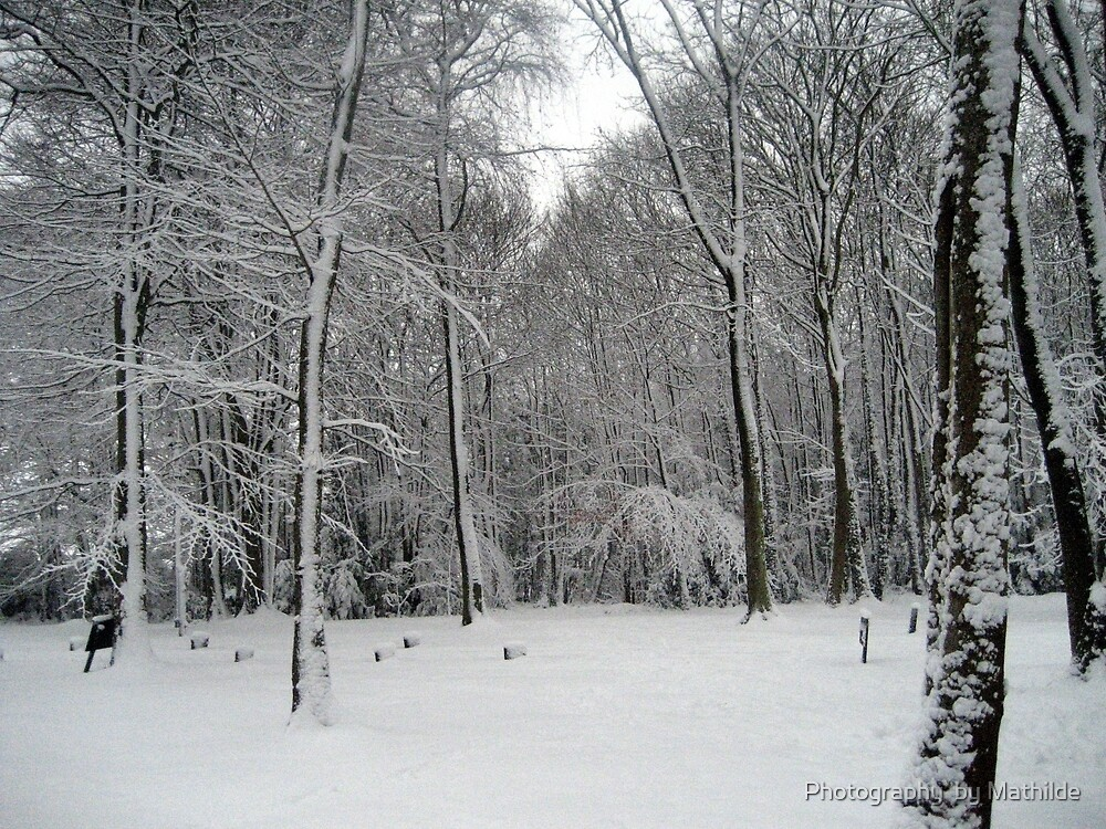 Narnia by Photography  by Mathilde