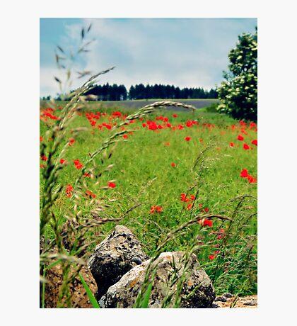 Tranquil Lanscape Photographic Print