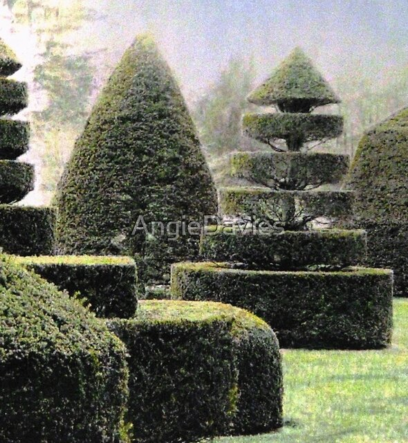 Dawn In A Topiary Garden by AngieDavies
