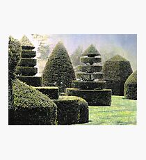 Dawn In A Topiary Garden Photographic Print