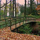 Bridge in Autumn Forest by ienemien