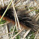 Huge, Hairy, Hebridean Caterpillar - Woolly Bear von BlueMoonRose