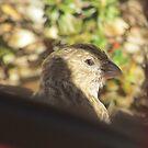Little Wren by brendalynn52