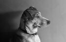 Model Dog by Alex Preiss