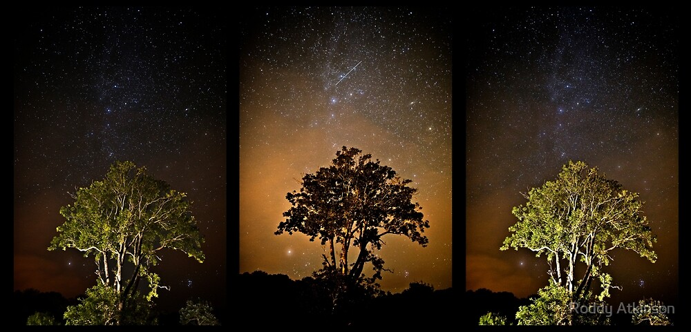 Stars and Tree Triptych by Roddy Atkinson
