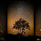 Stars and Tree Triptych by Roddy Atkinson