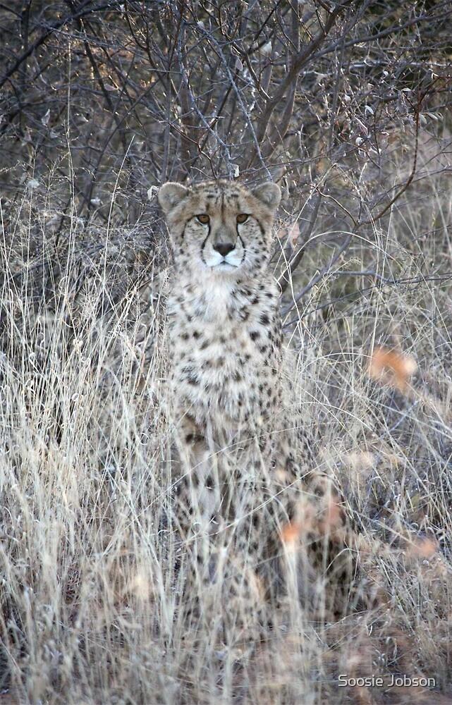 Cheeky Cheetah Checks You Out by Soosie Jobson