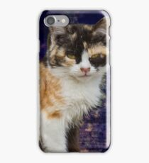 cute cat in the garden iPhone Case/Skin