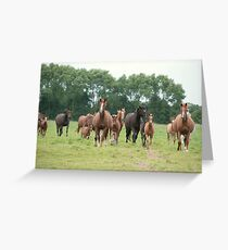 Mares and foals, Normandy Greeting Card
