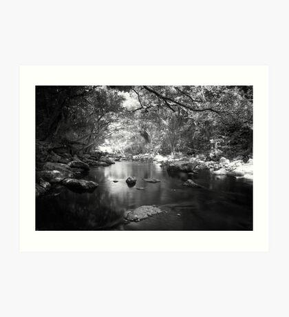 Freshwater Creek Art Print