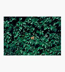 Orange horse in the bush Photographic Print
