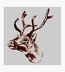 Reindeer  Photographic Print