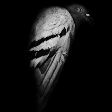 This joke is a loop. ( Pigeon - Bird ) by PauBerenguerM