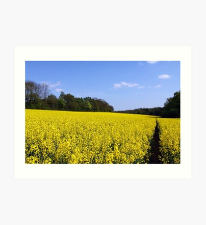 Canola Fields Art Print