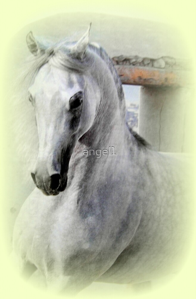 Arabian Horse  by ©The Creative  Minds