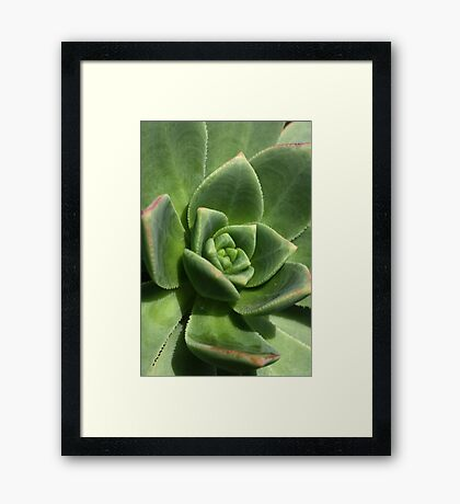 Green Faced Framed Print
