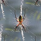 Colorful Garden Spider On Web by SmilinEyes