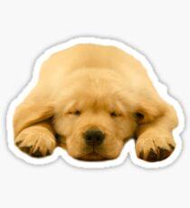 Sleeping Golden Retriever Puppy Sticker