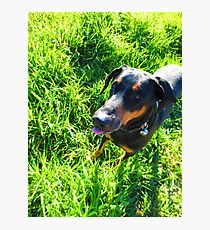 Majestic Doberman Photographic Print