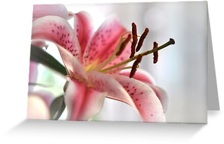 pink lilly by Karen E Camilleri