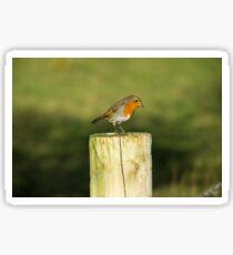 Rocking Robin Sticker
