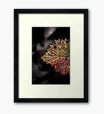 the beauty of stress Framed Print