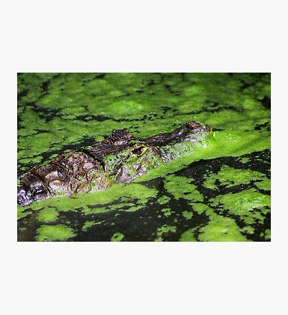 Hidden in Green Photographic Print