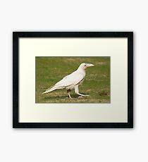 """Dare To Be Different"" (Rare White Raven) Framed Print"