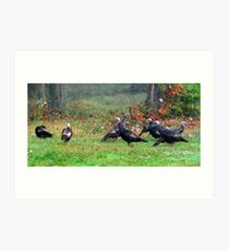 Wild Turkeys Feeding Along The Forest Art Print
