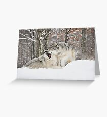 I'm not afraid of the big bad wolf... Greeting Card