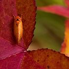 Her Best Fall Colors by Otto Danby II
