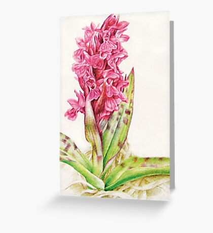 Hebrideaui orchid: Dactylorhza majalis Greeting Card