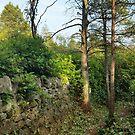 Cragside Labyrinth Wall by Richard Winskill