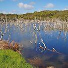 Woody Lake, Esperance, Western Australia by Adrian Paul