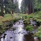 Cragside Pump House Stream by Richard Winskill